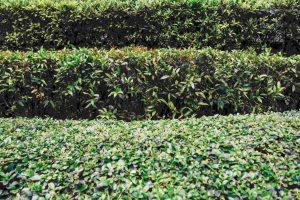 Hedge Cutting in Edinburgh