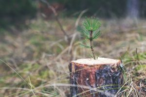 Stump Removal by Edinburgh Tree Surgeons